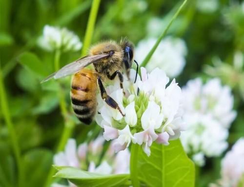 """Erhalt der Artenvielfalt – """"Rettet die Bienen"""""""
